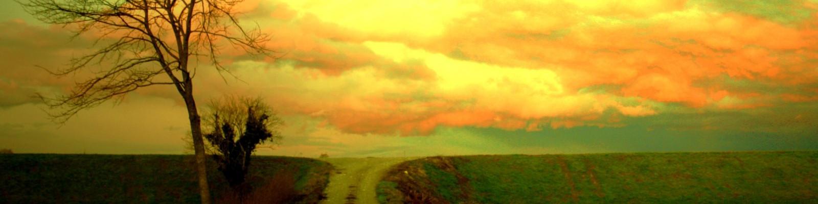Amanecer, árbol y camino